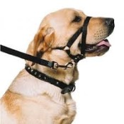 dog-training-access