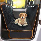dog-travelling