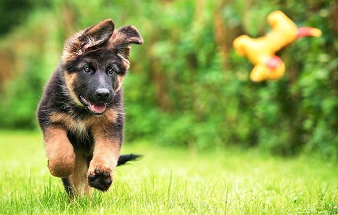 αξεσουάρ σκύλος