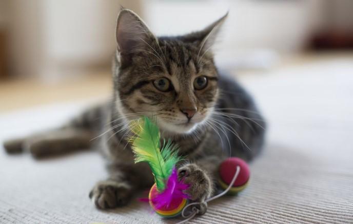 αξεσουάρ γάτα