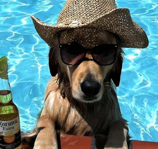 Προστατέψτε τον σκύλο σας το καλοκαίρι!
